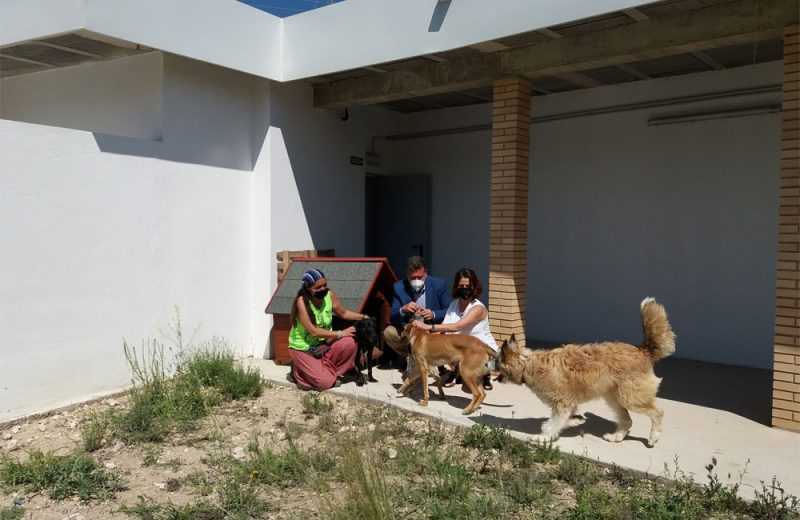 Albergue de perros y gatos en Teruel
