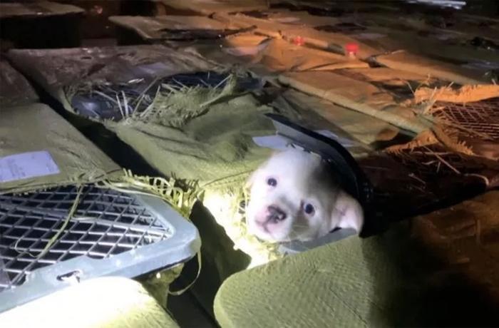 Pet Mystery Box, las cajas misteriosas de la muerte para miles de animales