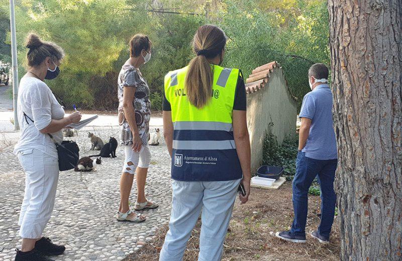 13.294 € para la aplicación del método CES para gatos en Altea (Alicante)