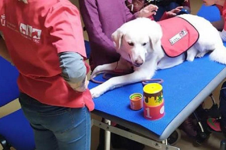 Educación asistida con animales
