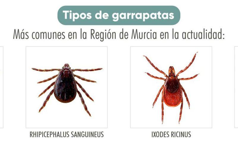 El Colegio de Veterinarios de la Región de Murcia elabora un programa informativo sobre la proliferación de las garrapatas