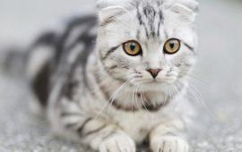 Una nueva investigación analiza la relación entre los gatos y sus dueños