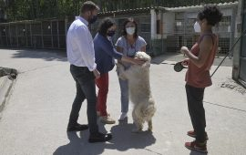 La Xunta convoca por 440.000 euros las ayudas a asociaciones protectoras y ayuntamientos para el cuidado de animales domésticos abandonados