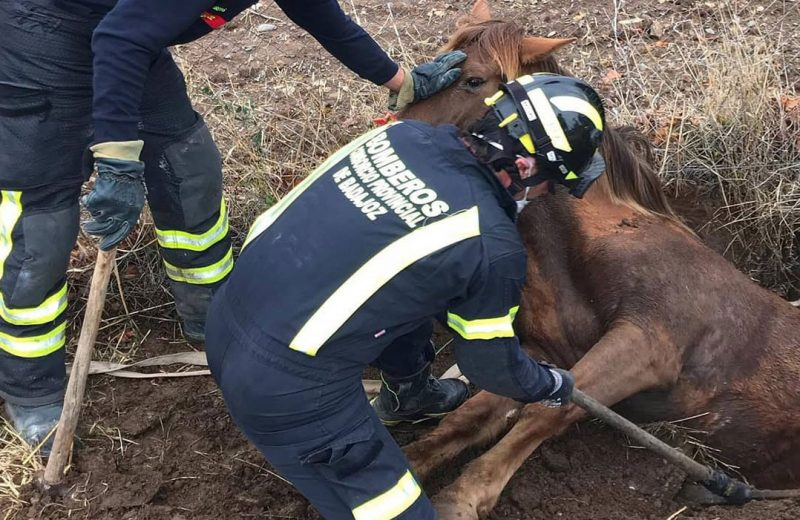 Rescate de animales por parte de los bomberos de la Diputación de Badajoz