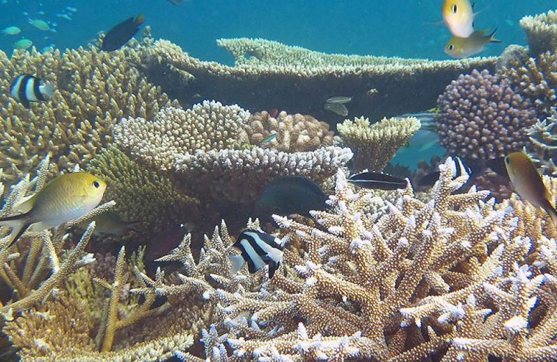 Sí el océano futuro es demasiado cálido podría tener la mitad de peces que ahora