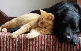 Toma de precauciones sensatas tras un nuevo estudio sobre el virus Covid-19 en mascotas