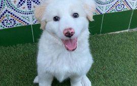 Importancia de la adopción en perros