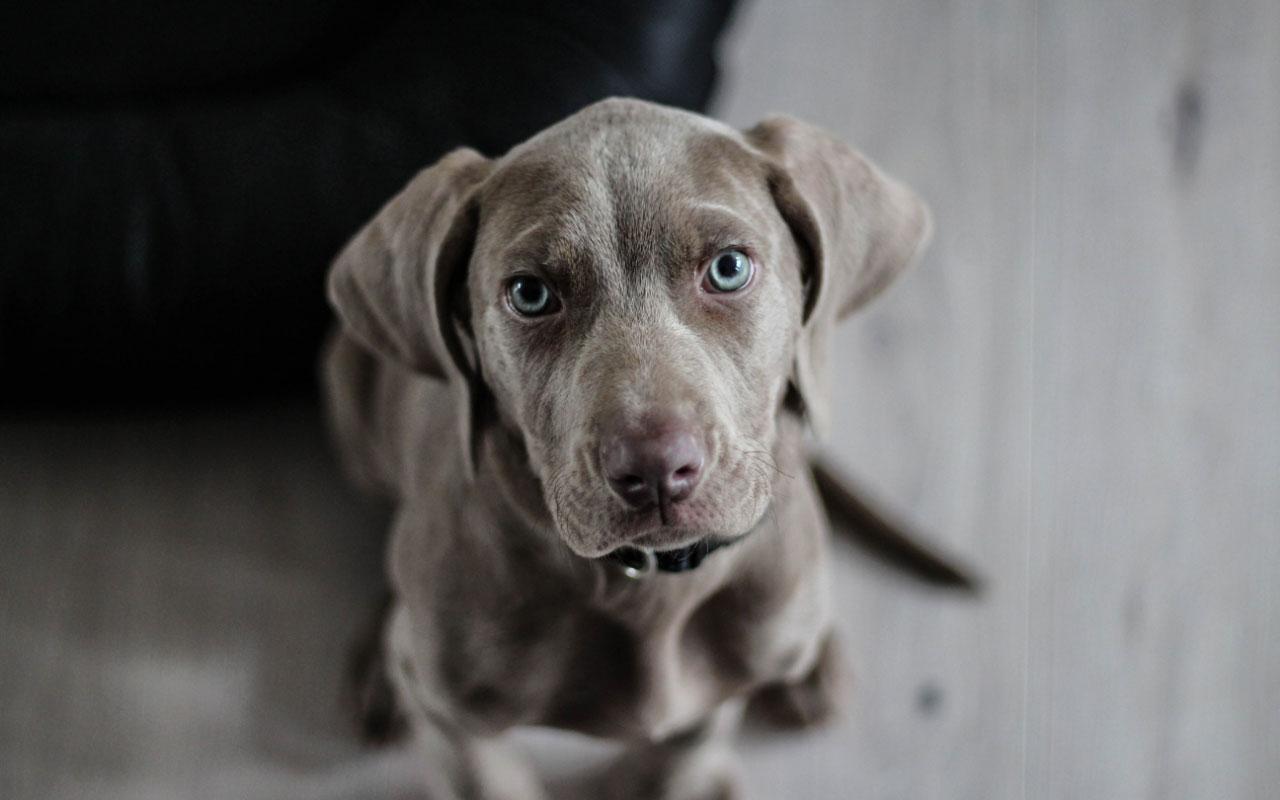 Cachorro - Enseñar a un perro a hacer sus necesidades en un solo lugar