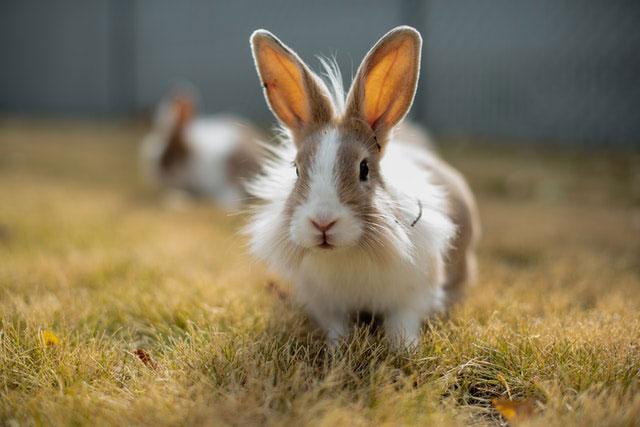 Conejo y el verano