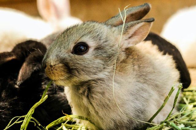 Conejos en el verano
