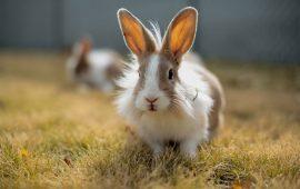 Los mejores cuidados de tu conejo para el verano