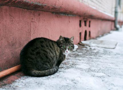 Curso gratuito sobre buenas prácticas en la gestión de colonias felinas del Ayuntamiento de Madrid