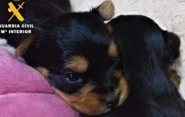 La Guardia Civil esclarece 6 estafas en la venta de mascotas a través de internet