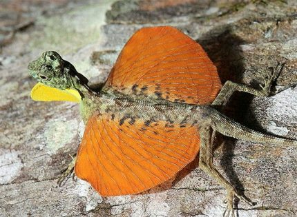 Dragón volador: un pequeño dragón en miniatura
