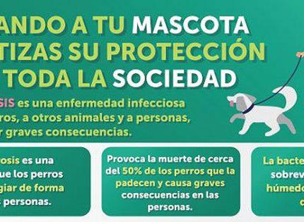 La prevención de enfermedades como la rabia o la leptospirosis a través de la vacunación