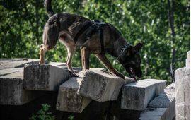 La función olfativa canina asociada con la salud, el manejo y los vínculos potenciales con la microbiota
