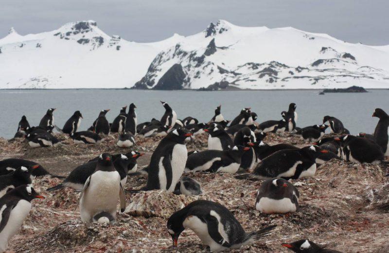 Pinguinos árticos