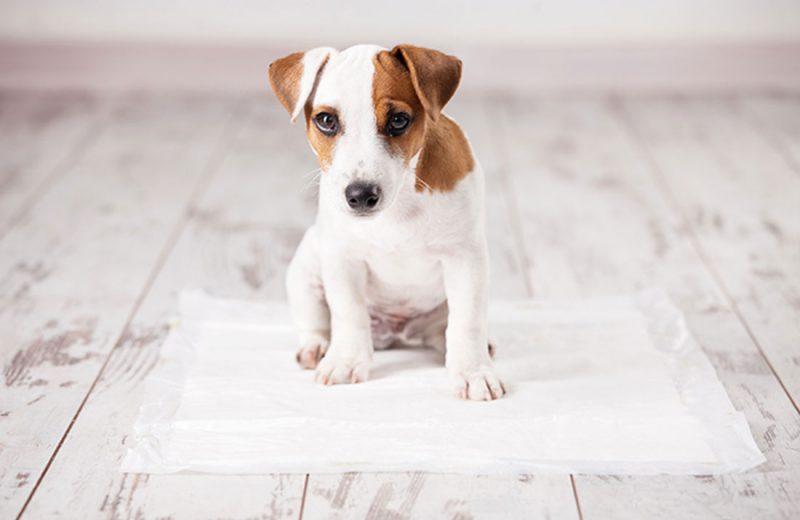 Cómo enseñar a un perro a hacer sus necesidades en un solo lugar