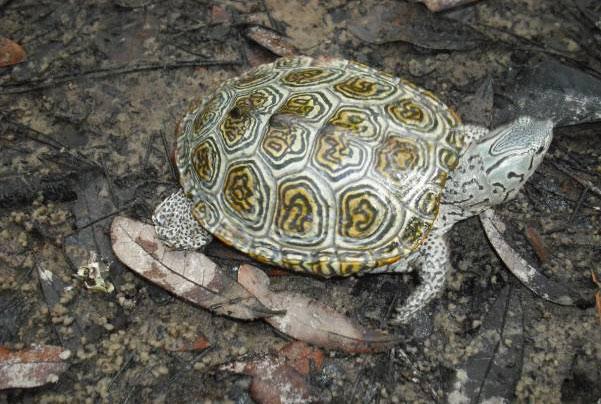 ¿Qué pasaría si las tortugas desapareciesen de la tierra?
