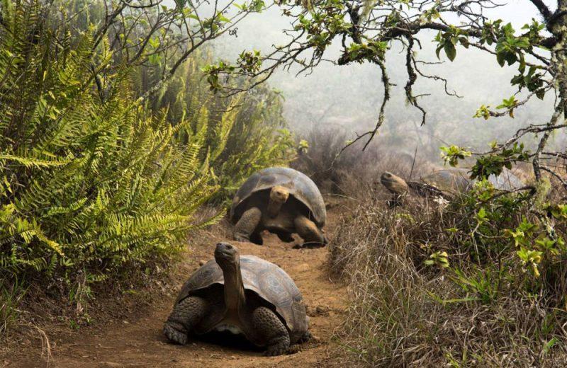 Genes de resistencia antimicrobiana en las tortugas gigantes de Galápagos