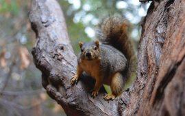 Cómo aprenden las ardillas a saltar de rama en rama sin caerse