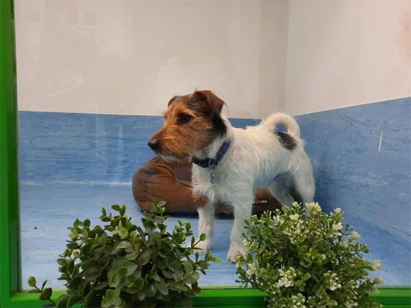 Residencia canina Animal Solution