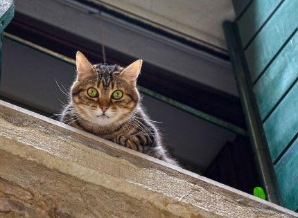 Urgencias veterinarias en gatos más frecuentes