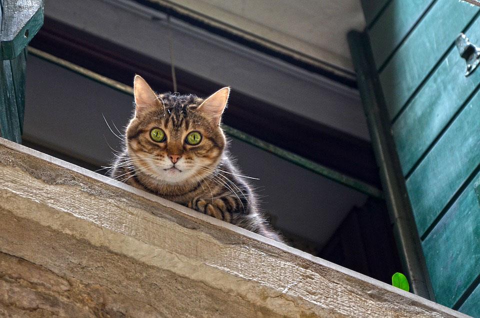 Caídas - Urgencias veterinarias gatos