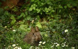 Las mejores hierbas para conejos, cobayas, chinchillas y otros pequeños mamíferos