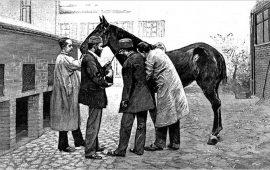 Héroes de cuatro patas: Jim, el caballo que salvo a cientos de niños de la difteria