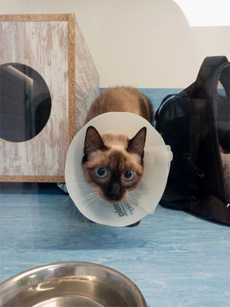Gato en Animal Solution