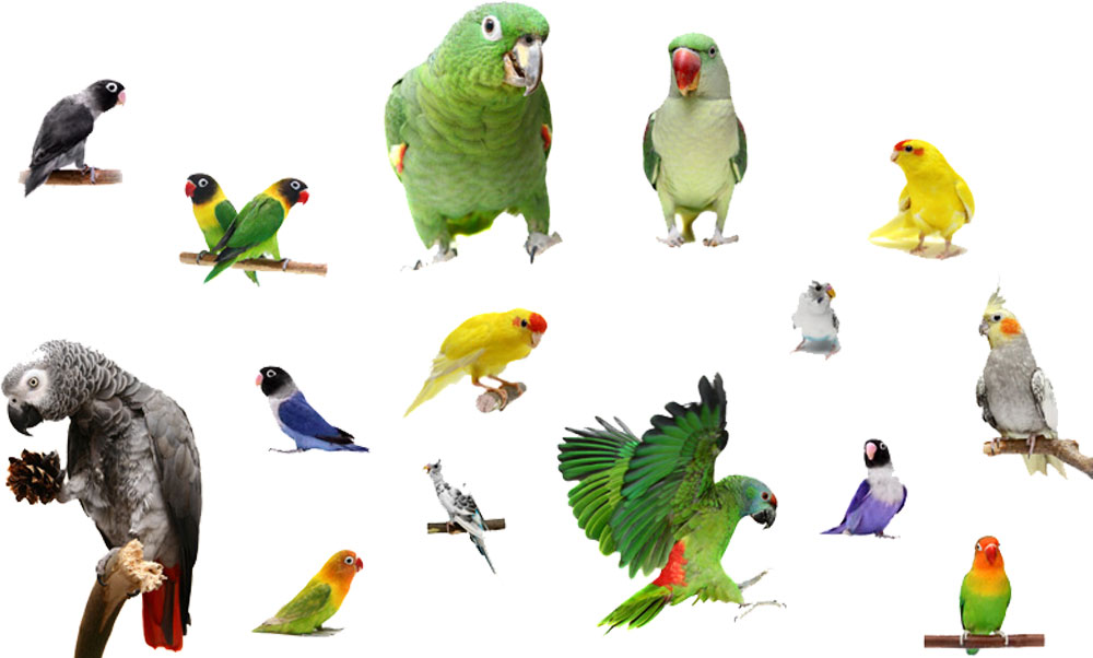 Loros, loriquitos, aves