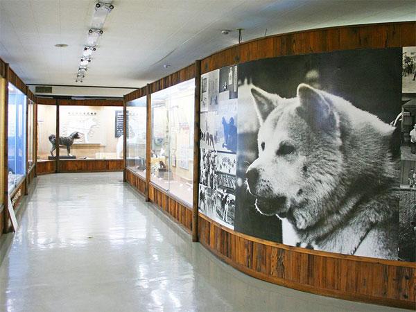 Museo del Akita-Inu