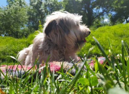 Encontrar la mascota adecuada para adoptar en Pamplona