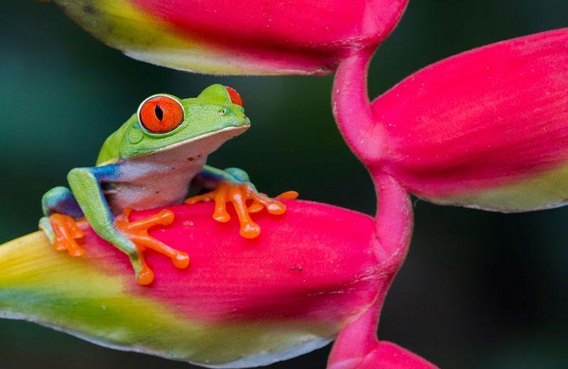 Una investigación innovadora muestra que los anfibios más pequeños tienen un mayor riesgo de extinción