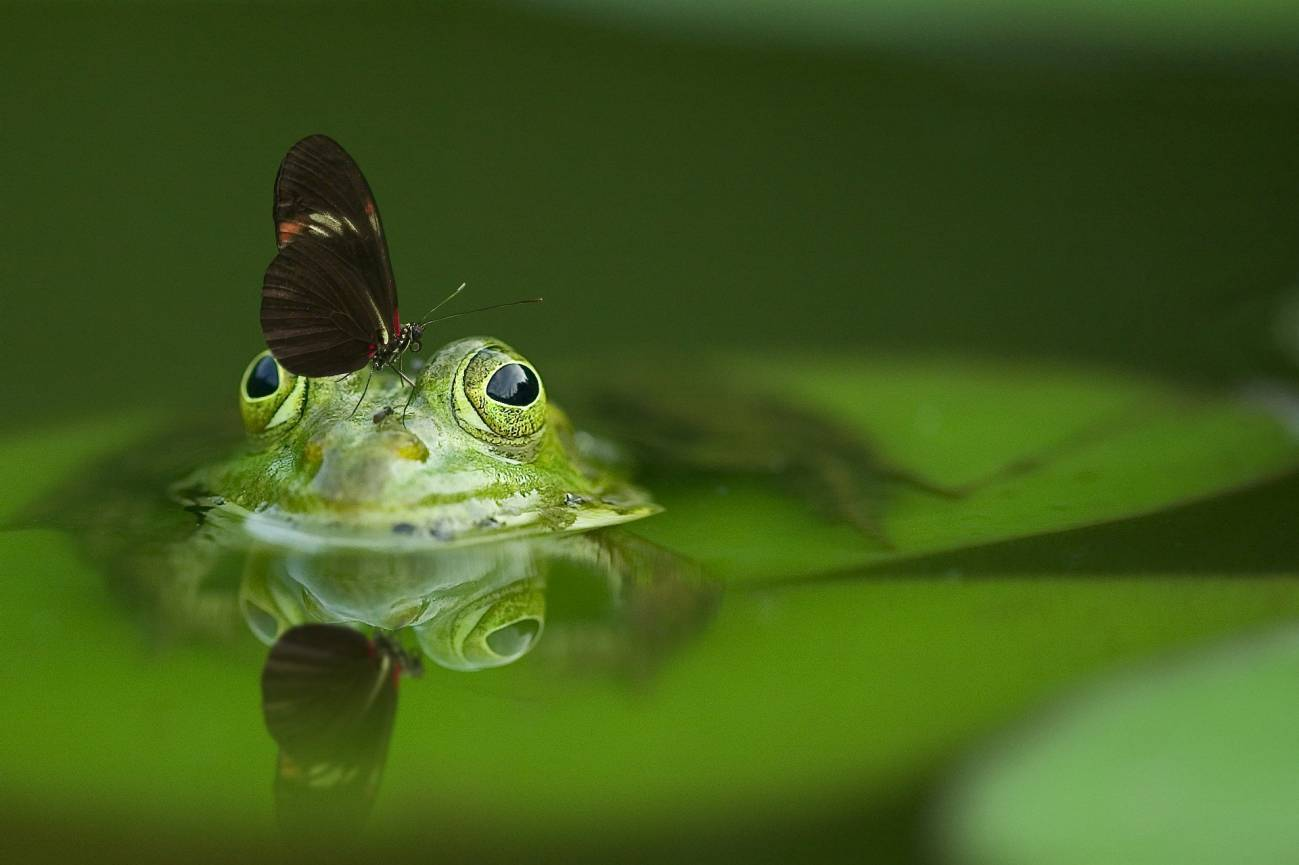 Rana con mariposa