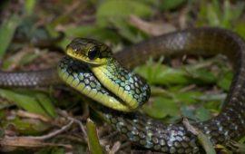 La mala fama de las serpientes y su valor ecológico insustituible
