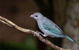 Las aves que dispersan más tipos de semillas tienen mayores posibilidades evolutivas
