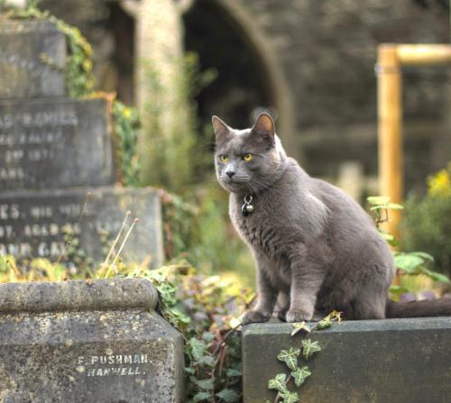 Gato en cementerio