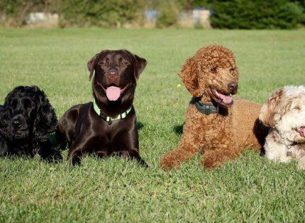 Madrid acogerá 6.000 perros de todas las razas este fin de semana para reivindicar su valor histórico y social