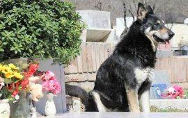 Animales y Régimen de Sucesiones, garantizar el bienestar del animal cuando el dueño haya fallecido