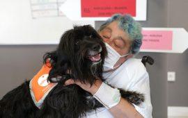 Terapia con perros para fomentar la autonomía de pacientes frágiles