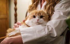 La importancia de respetar la naturaleza de nuestro gato