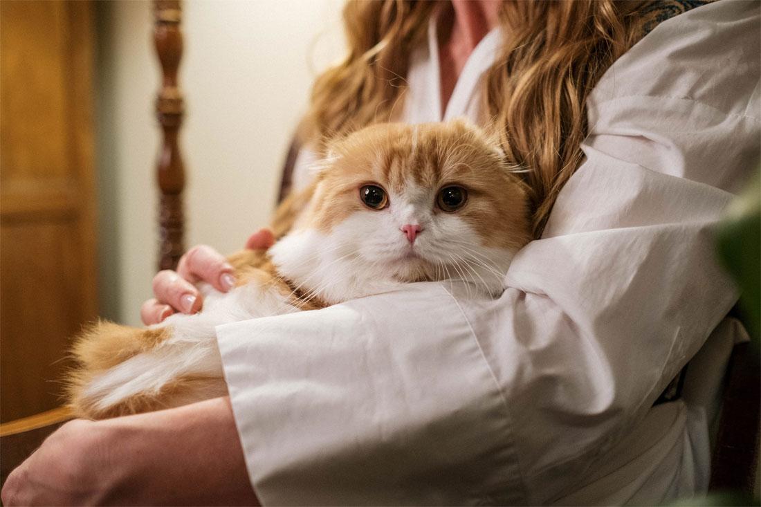 Gato en brazos