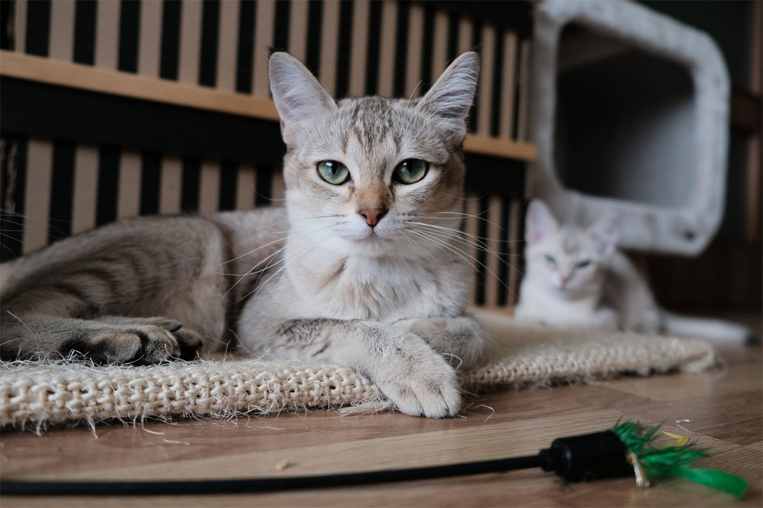 Gatos - cat sitting - cuidado de gatos
