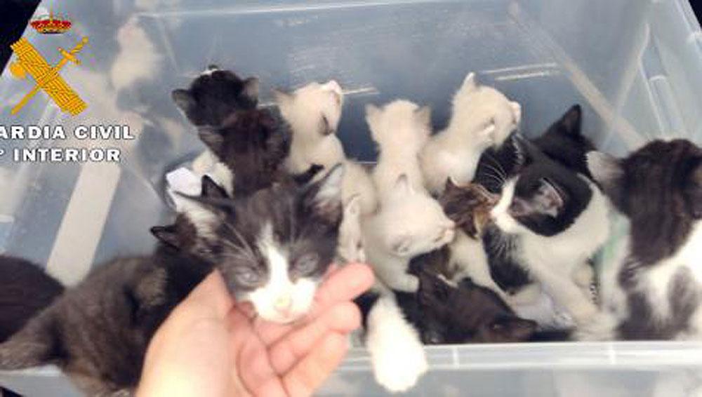 Gatos abandonados