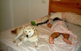 ¿Es bueno qué los niños y las mascotas duerman juntos?