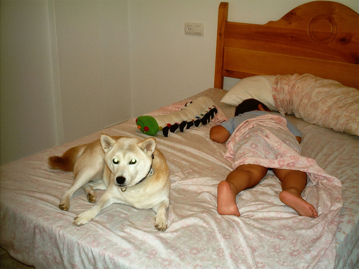 Perro durmiendo con niño