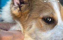 El SEPRONA de Almansa (Albacete) investiga a un vecino de Caudete como presunto autor de un delito de maltrato animal