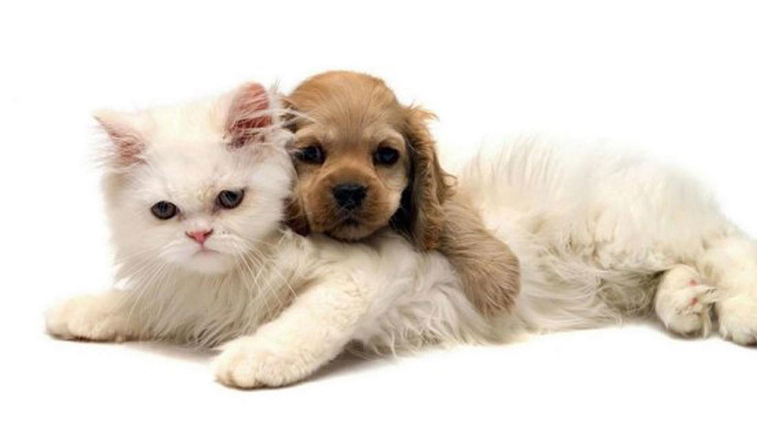 «Dog sitting» y «cat sitting» una alternativa a la guardería canina y felina